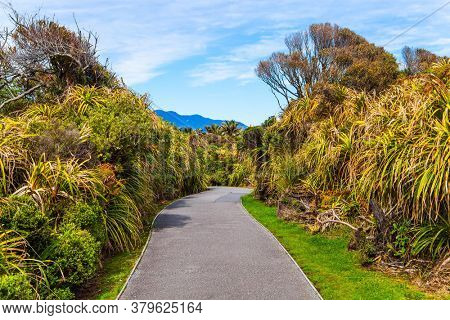 Footpath in the park. Paparoa National Park, New Zealand. Incredible journey to the ends of the world. The concept of ecological, active and photo tourism