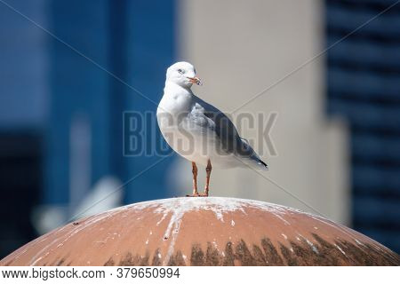 An image of a typical seagull on a roof