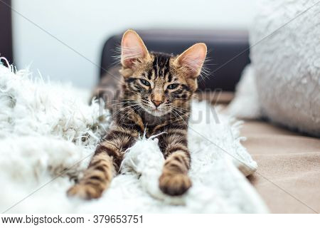 Little Charcoal Bengal Kitty Laying On The White Blanket.