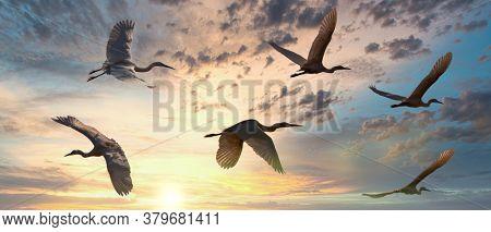 flock of birds inflight, during migration