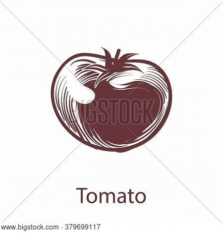 Tomato Object. Botanical Hand Drawn Eco Vegetable Sketch For Labels And Packages In Engraving Style.