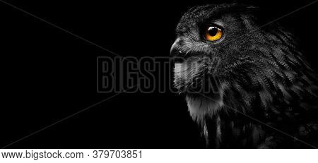 Close-up Of A Great Spotted Owl On A Black Background. Detail Bubo Bubo. Owl On The Black Background