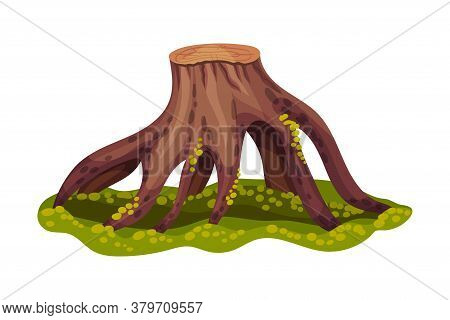 Stump Or Tree Stub With Roots Covered With Green Moss As Forest Element Vector Illustration