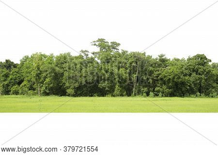 Trees, View Of A High Definition, Green Trees Isolated On White Background, Forest And Foliage In Su
