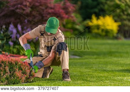 Male Worker Squatting Down And Trimming Small Red Bush With Manual Shears.