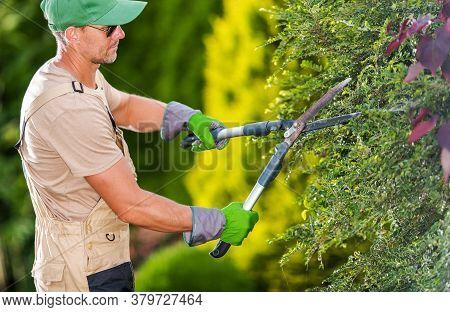 Caucasian Male Gardener Trimming Bushes And Shrubs With Steel Hedge Shears.