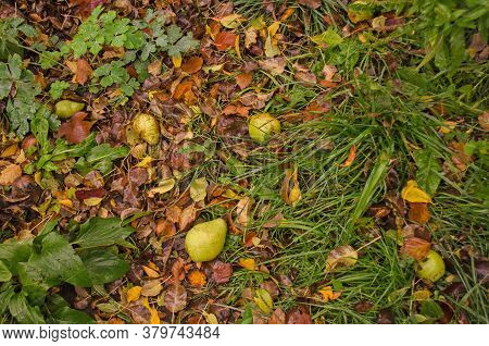 Autumn Background Texture With Colorful Leaves. Patterns Of Colorful Leaves On Grass