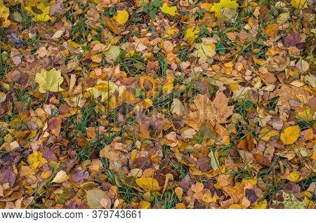Autumn Fall Colorful Background. Autumn Leaf Fall