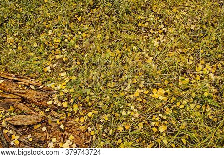 Autumn Background Texture. Fall Leaves In Green Grass
