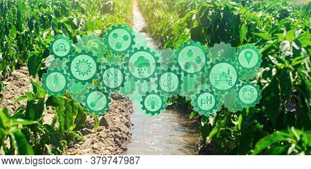Futuristic innovative technology pictogram on green pepper fields on an sunny day. Agricultural startups, improvements. Innovation and development. Watering and irrigation pepper in the field