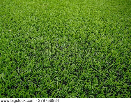 Football Field, Astro Turf Surface. Close Up Of Throw In, Kick Off And Corner Area. Lushed Green Foo