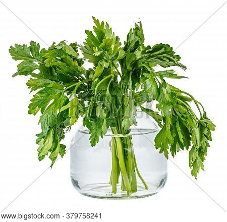 Bunch Of Parsley In Glass Jar With Water Isolated On White Background