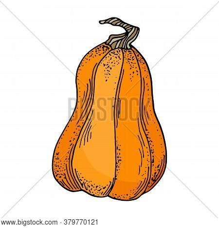 Vector Pumpkin Illustration. Cute Cartoon Orange Gourd Vegetable Isolated On White Background. Hand