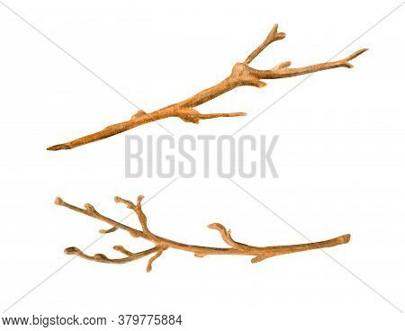 Watercolor Dry Tree Branches Set. Hand Painted Bare Twigs And Sticks Isolated On White Background. W