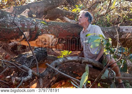 Biologist Environmentalist Looking Over The Damage Cause To An Avocado Tree That Was Bulldozed Down