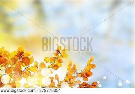 Fresh Yellow Fall Tree Foliage On Pale Cloudy Sky Background