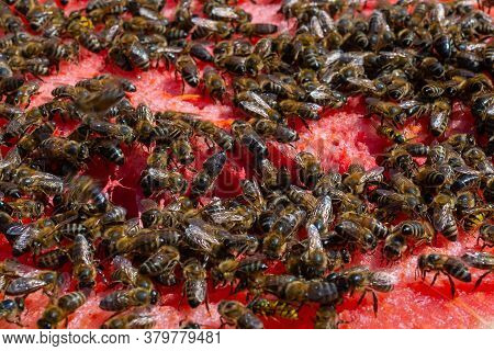 Sweet Watermelon. A Huge Number Of Bees On A Ripe Red Watermelon. A Ripe Watermelon Close-up With Be