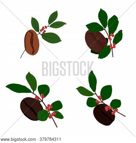Vector Stock Illustration Of The Degree Of Roasting Of Coffee Beans. Close-up Of Coffee. Concept Of