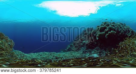 Coral Reef Underwater With Fishes And Marine Life. Coral Reef And Tropical Fish. Panglao, Philippine