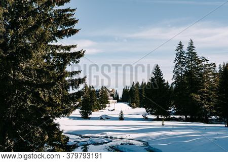 A Large House In The Winter Among The Snow In A Coniferous Forest Among The Trees Against The Blue S
