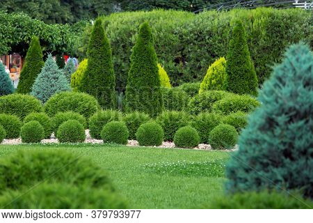 Landscaping Of A Backyard Garden With Evergreen Cypress And Thuja In A Summer Park With Decorative L