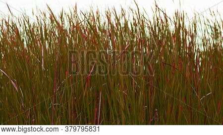 The Tall Red And Green Grass And By The Lakeshore Wich Rich Colors Inversion
