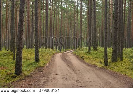 Dirt Road In Pine Forest At Cloud Summer Day, Karelian Isthmus, Russia.