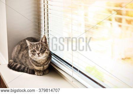 Cute Tabby Cat Near Window Blinds On Sunny Day