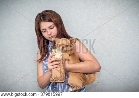 A Young Girl Holds A Small Red Dog In Her Arms And Offers Her Shawarma. The Dog Turns Away And Does