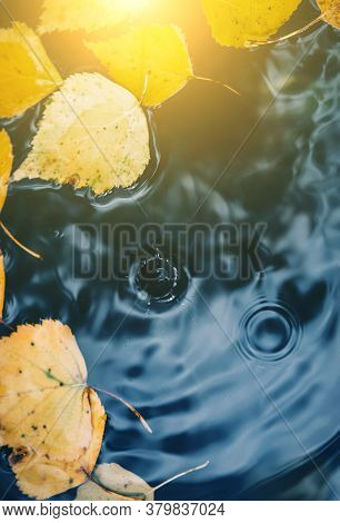 Big Drops Falling On Puddle Leaving A Radial Circles On The Surface With Fallen Yellow Leaves On The