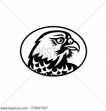 Mascot Illustration Of Head Of A Peregrine Falcon Or The Duck Hawk In North America, A Bird Of Prey