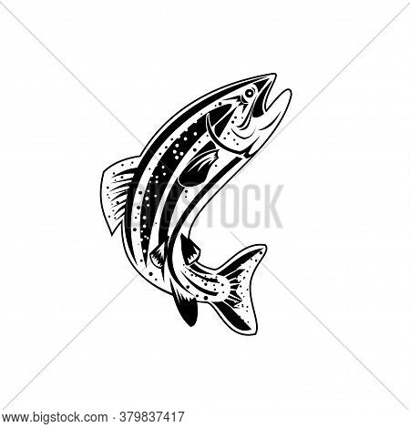 Retro Style Illustration Of A Columbia River Redband Trout, Inland Redband Trout Or Interior Redband