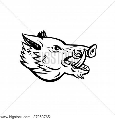 Mascot Illustration Of Head Of A Wild Boar, Sus Scrofa, Wild Swine, Common Wild Pig, A Suid Native T