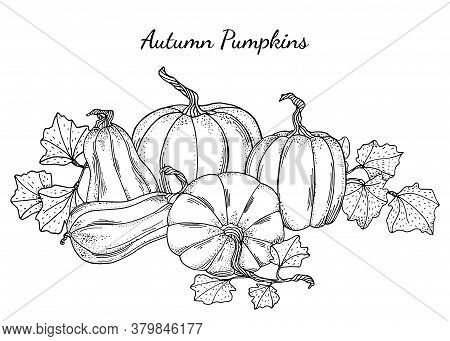 Black And White Pumpkins Vector Illustration. Hand Drawn Vintage Autumn Composition. Outline Gourds