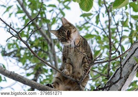 A Gray Young Cat Sits On A Tree And Playfully Looks Directly At The Camera. Street Tabby Cat With Be