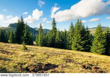 Spruce Forests Of The Apuseni Natural Park. Sunny Afternoon In Mountains. Beautiful Travel Destinati