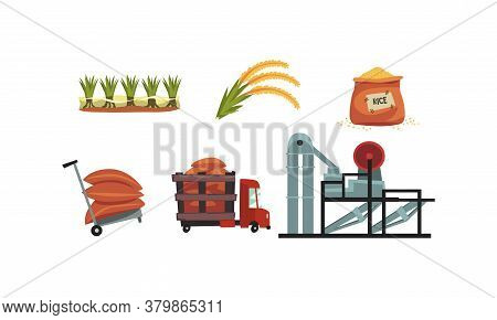 Rice Production Process Set, Cultivation, Harvesting And Drying Product Cartoon Style Vector Illustr