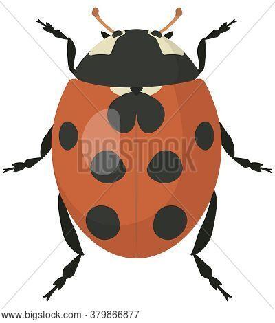 Ladybug In Cartoon Style. Beetle Isolated In White Background.