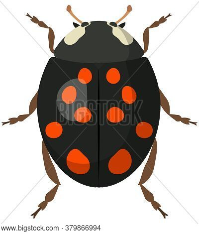 Black Ladybug In Cartoon Style. Insect Isolated In White Background.