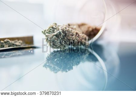 The Pot Leaves On Buds Thc Cbd. White Background. Close Up. Cannabis Weed Bud And Grinder.