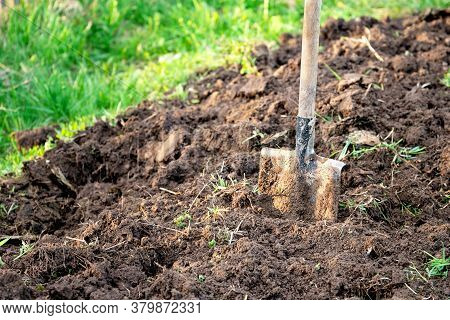 Shovel Stuck In The Ground On The Garden Bed. Gardening Tool And Equipment. Garden Work At Summer Or