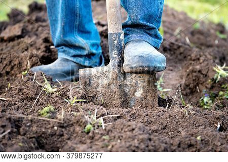 Male Feet In Rubber Boots Digging The Ground In The Garden Bed With An Old Shovel In The Summer Gard