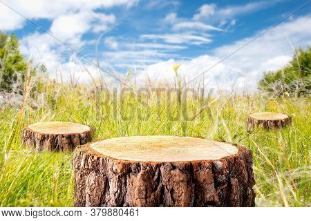 Deforestation Concept. Stumps In The Meadow At Summer Day. Eco.