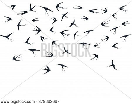 Flying Martlet Birds Silhouettes Vector Illustration. Nomadic Martlets Swarm Isolated On White. Glid