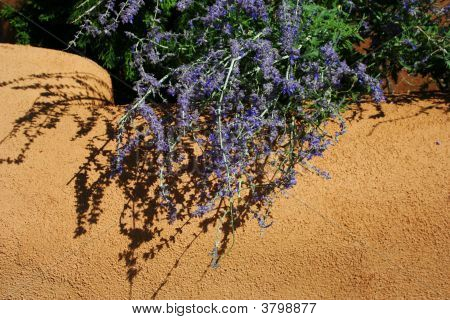 Purple Flowers And Adobe Surface