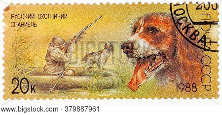 Ussr - Circa 1988: A Stamp Printed In Ussr, Shows Russian Spaniel, Duck Hunt, Series Hunting Dogs, C