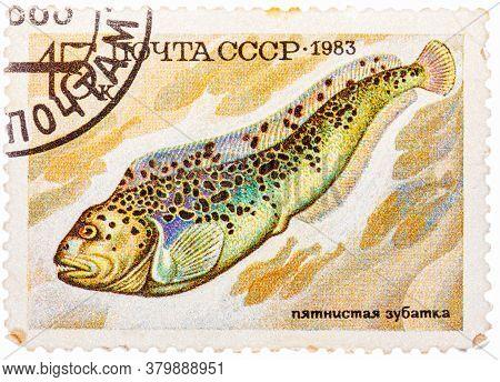 Russia - Circa 1983: Stamp Printed By Russia Ussr , Shows Fish, Anarhichas Minor, Circa 1983
