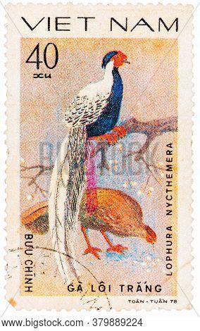 Vietnam - Circa 1978: A Stamp Printed In Vietnam Shows Lophura Nycthemera Or Silver Pheasant, Series
