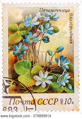 Russia - Circa 1983: Stamp Printed In Ussr Cccp, Soviet Union Shows Anemone Hepatica Liverwort, Kidn