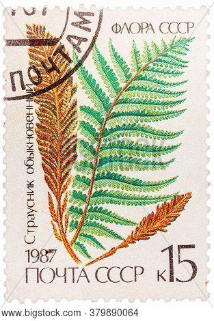 Ussr - Circa 1987: Stamp Printed In The Ussr Shows Ostrich Fern, Circa 1987